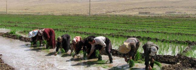 New Strategies Needed to Reduce Water Use in Iran