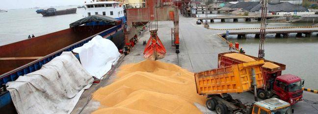 Contaminated Corns Abandoned at Imam Khomeini Port