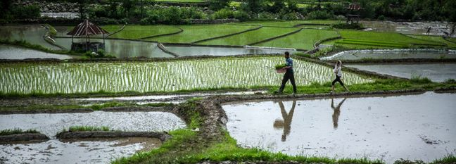 Iran: Rice Self-Sufficiency This Year