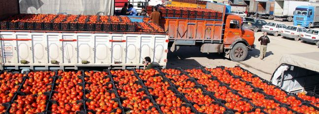 Ban on Tomato Paste Exports Lifted