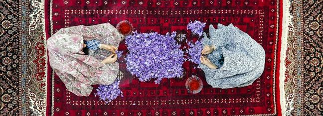 Iran Saffron Exports Top $145m in H1 2018