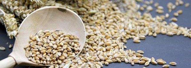 Iran's Barley Imports at $600m Last Year