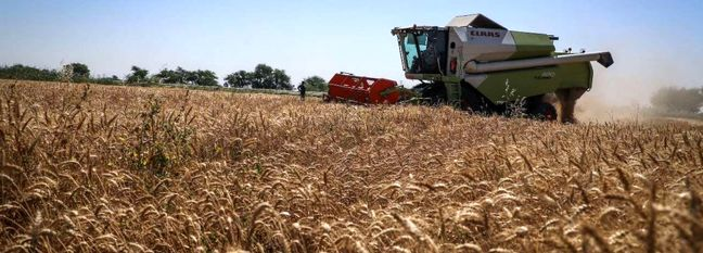 Barley Production Expected to Rise