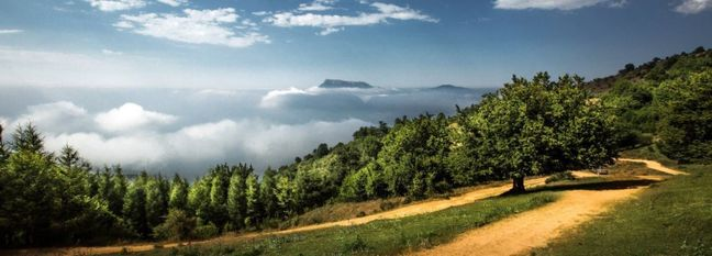 Iran's Hyrcanian Forests Added to UNESCO World Heritage List