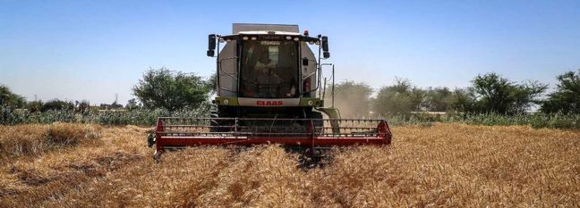 Iran: Land Under Wheat Cultivation Reaches 6 Million Hectares