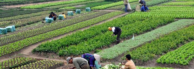 10% Rise in Agrifood Exports