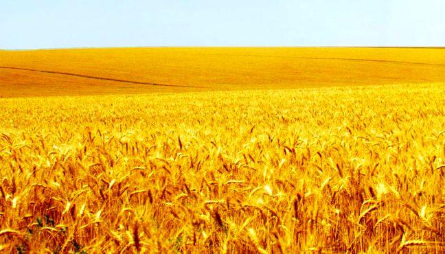 Iran's Bakers Need 1 Million Tons of High-Gluten Wheat Imports