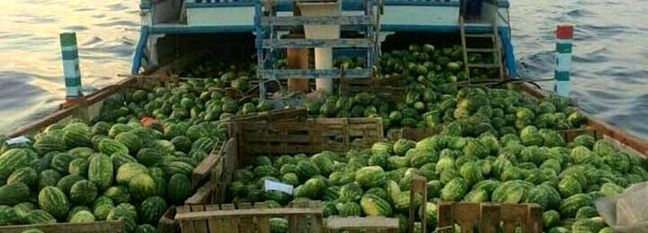 5% Rise in Watermelon Exports