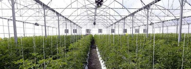 Construction of Largest Greenhouse Complex Launched