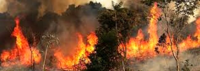 $880K Allocated to Fighting Wildfires