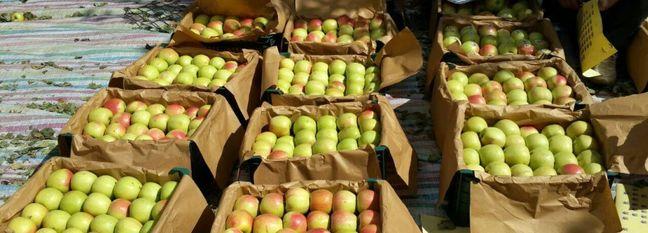 W. Azarbaijan Accounts for Bulk of Apple Exports