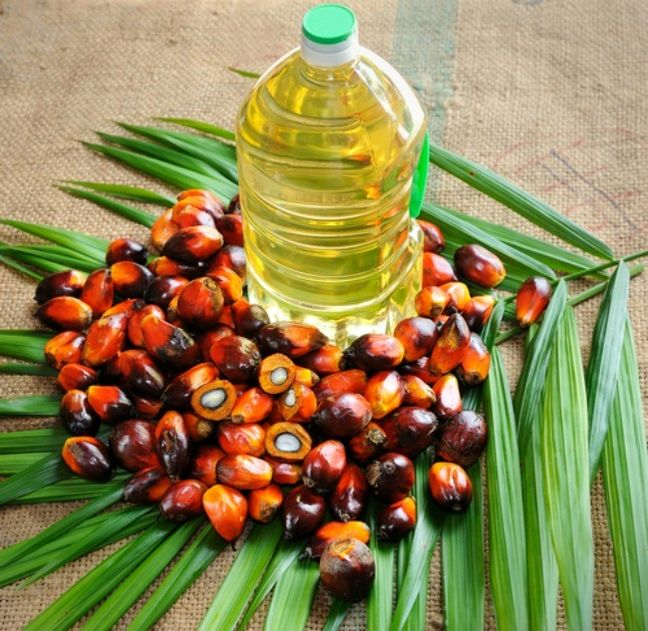 Iran Palm Oil Market to Top $600m by 2025