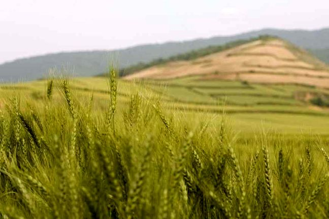 Agro Sector Output on Growth Path