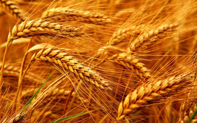 Egypt Power Struggle Rattles Wheat Market as Traders Shun Tender